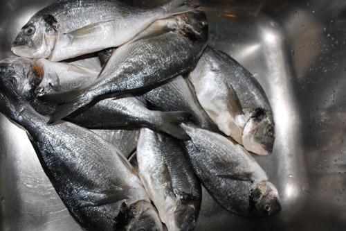 fish before
